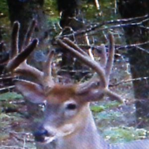 whitetail deer buck hunt hunting land trail camera western kentucky