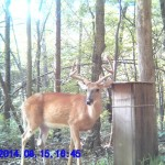 whitetail deer buck hunt hunting land trail camera