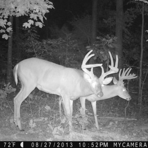 whitetail deer buck hunt hunting land trail camera western Kentucky KY
