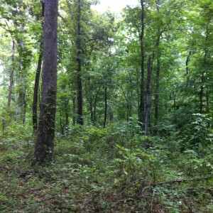 land for lease KY Kentucky Dream Hunter Butler County farm hunting hunt timber whitetail deer turkey