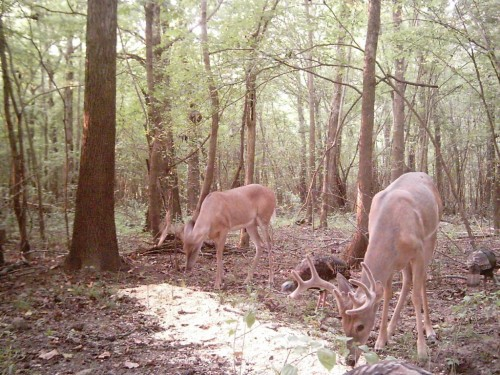 whitetiail deer buck turkey hunt lease land